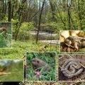 Biodiversitäts-Inventur im Main-Kinzig-Kreis
